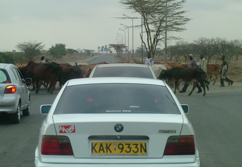 Cattle Crossing - Mombassa Highway
