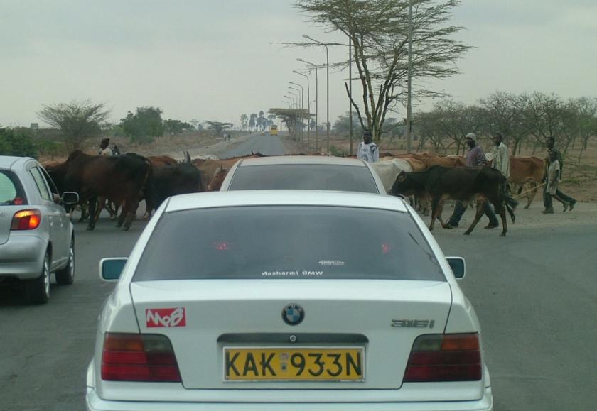 Cattle Crossing - Mombassa Highway