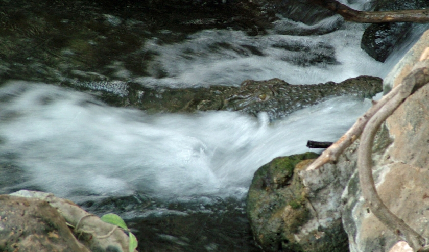 Spot the Croc - Tsavo