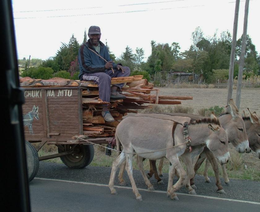 3-Donkey Cart